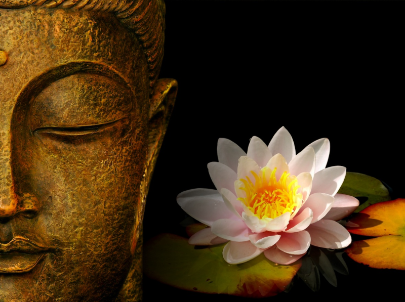The Buddha has something to say too......Image courtesy of http://sathyasaibaba.files.wordpress.com/2010/06/buddha-wallpapers-photos-pictures-h2o-lily.jpg