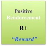 Positive Reinforcment