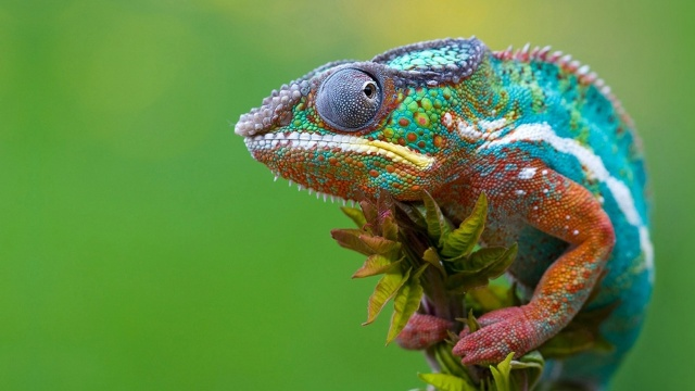I am the Chameleon you call Spirituality. Watch my colors change.