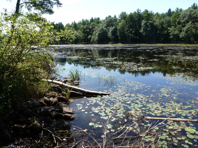 By choosing this retreat, I found a different kind of stillness.  Gaston Pond, on an IMS walking trail.