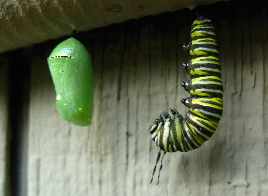 Every caterpillar takes a faithful leap before becoming a butterfly. Image courtesy of Flickr Sharing.