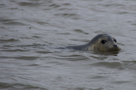 If you're looking to learn to swim in the waters of mindfulness, look for an experienced teacher. Or, find a seal of approval. Image courtesy of geograph.uk.
